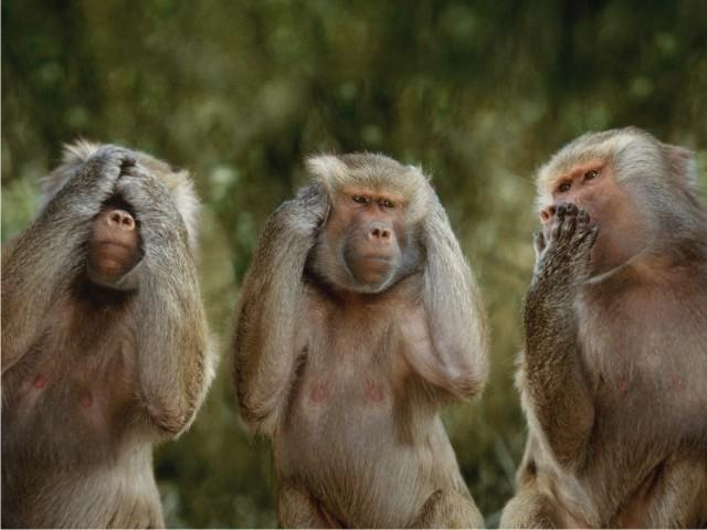 Kisah delapan monyet