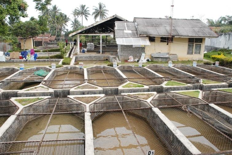 Cara membuat kolam ikan nila yang ideal